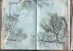 trees-lookingup