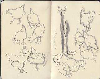 Alpaca-Chickens-WEB