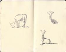 Alpacas-WEB